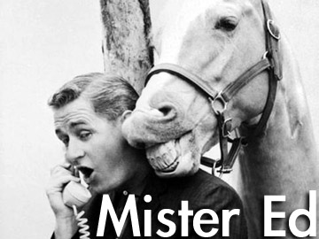 """Never speak unless you have something to say."" -Mr. Ed"